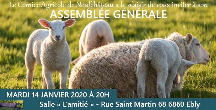 EBLY – 14 janvier à 20h00 – L'élevage ovin en Wallonie et les haies