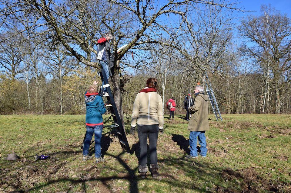 Formations sur la taille des arbres fruitiers au Domaine provincial de Chevetogne