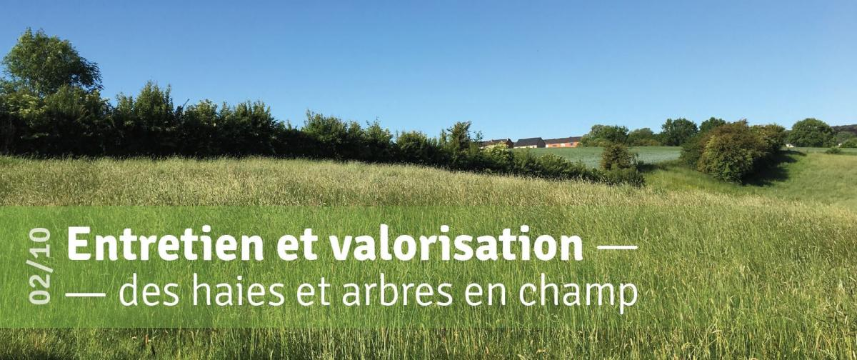 Entretien et valorisation des haies et arbres en champ