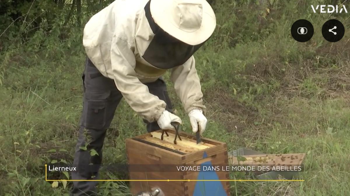 Quentin Targnion, maître des abeilles!