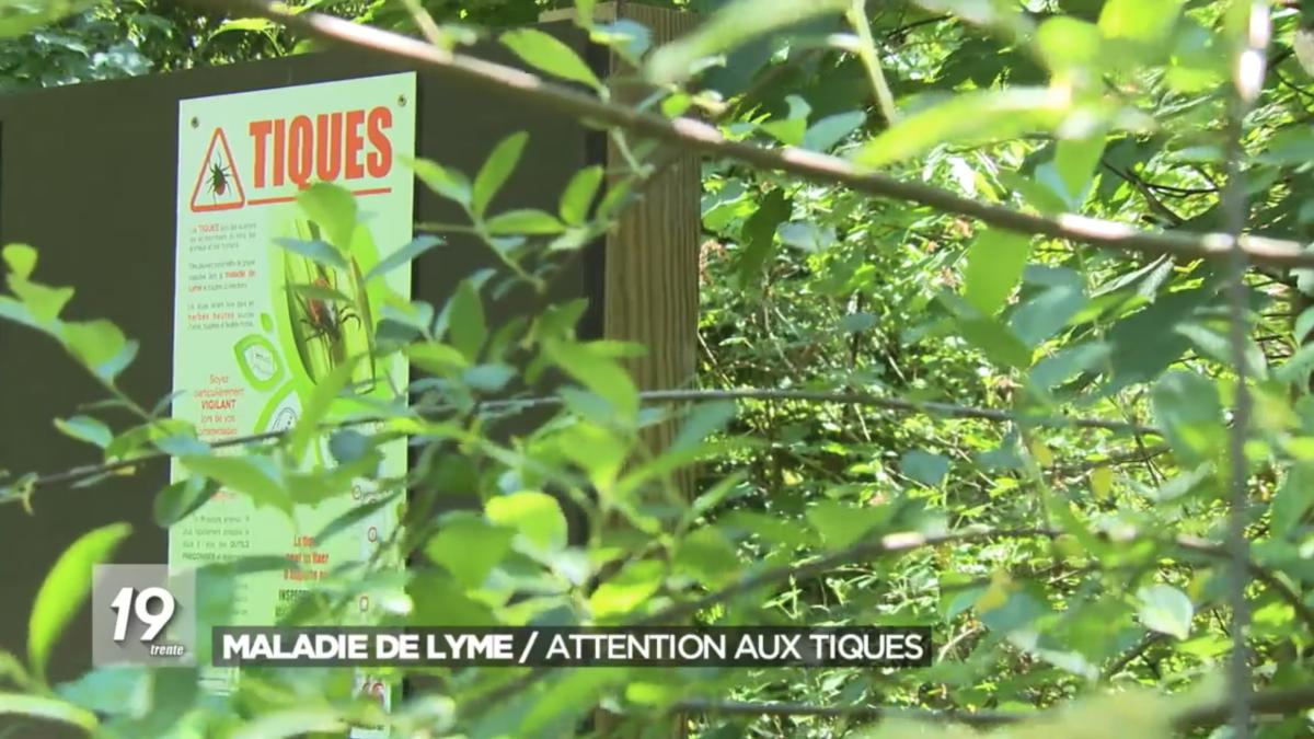 Maladie de Lyme / Attention aux tiques