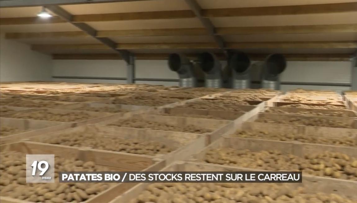 Patates bio : des stocks restent sur le carreau