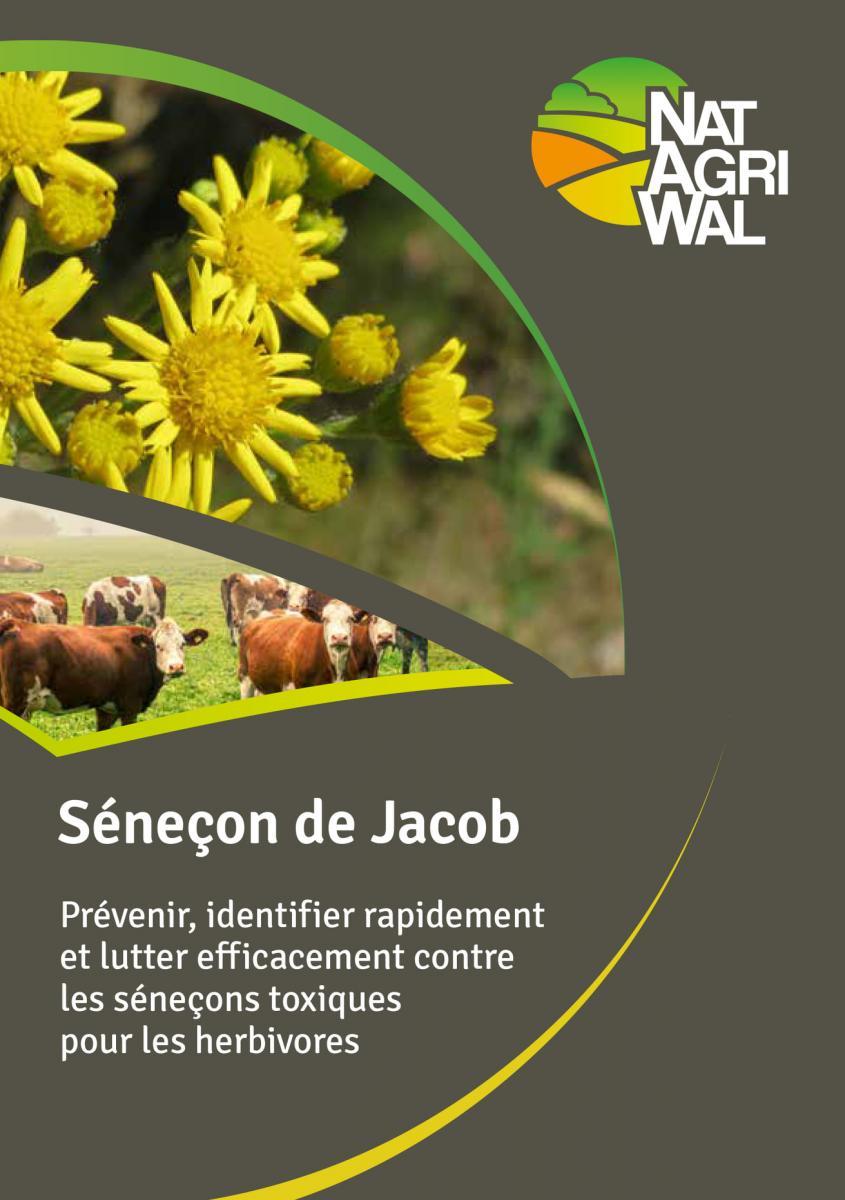 [Brochure] Le séneçon de Jacob